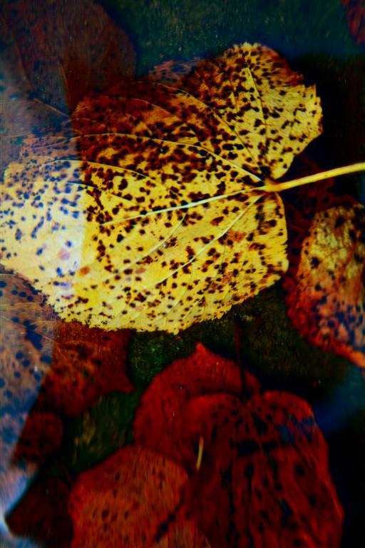 Foliage Autumn Leaf