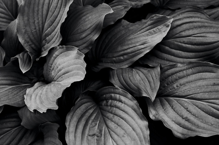 leaves-nature