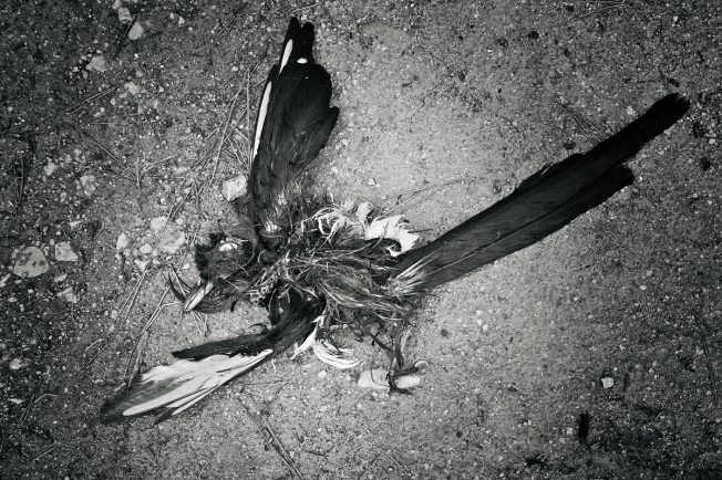 carcass of a bird